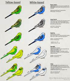 color genetics budgerigar colour genetics by riverraven on deviantart