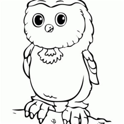 baby owl colouring pages