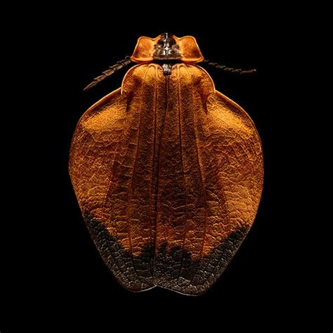 1419726951 microsculpture portrait of insects 17 best levon biss images on pinterest beetles bugs and