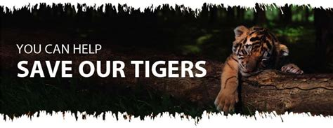 NDTV's Save Our Tigers Campaign:Contest
