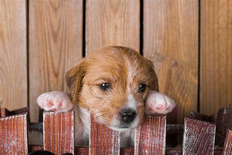 donate  animal shelters  million women