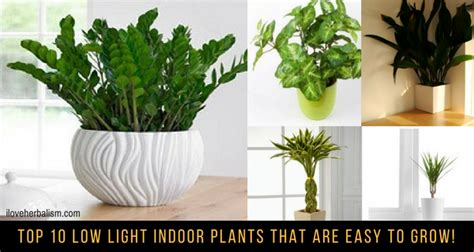 best plants to grow indoors in low light top 10 low light indoor plants that are easy to grow i