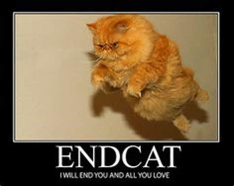 Flying Cat Meme - inspirational kitties on pinterest cat posters
