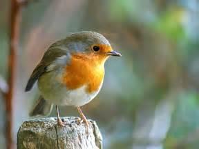 venez observer les oiseaux dans les jardins de
