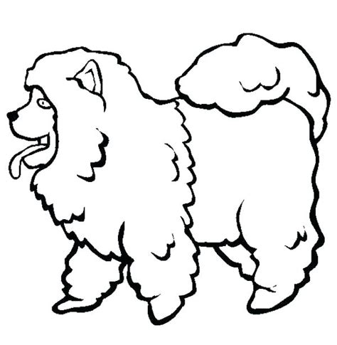 poodle coloring pages baby poodle coloring pages sketch coloring page