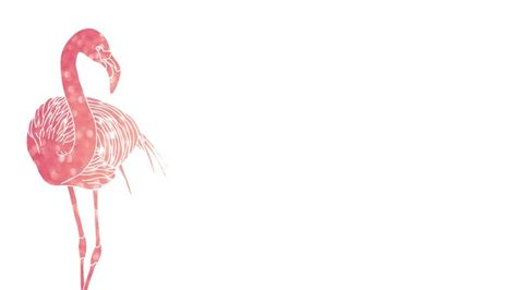 flamingo macbook wallpaper 126 best images about laptop wallpapers on pinterest