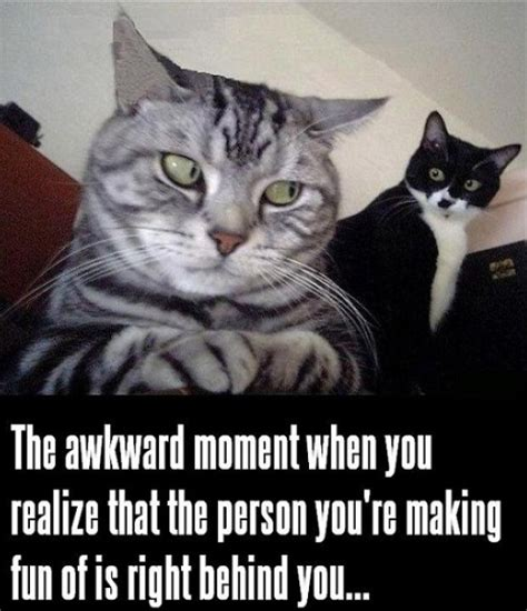 Kitty Cat Meme - 25 funny cat memes cattime