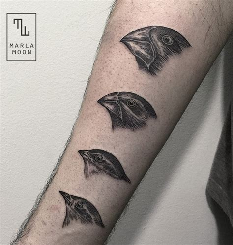 finch tattoo darwin s finches illustration arm best