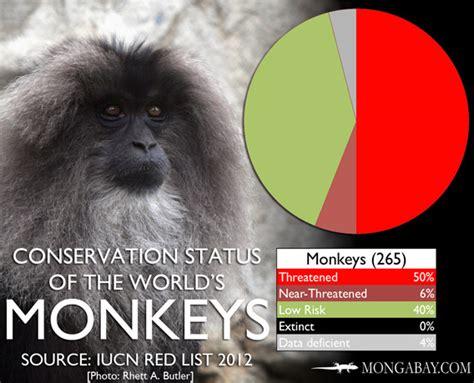 CHART: The world's most endangered monkeys