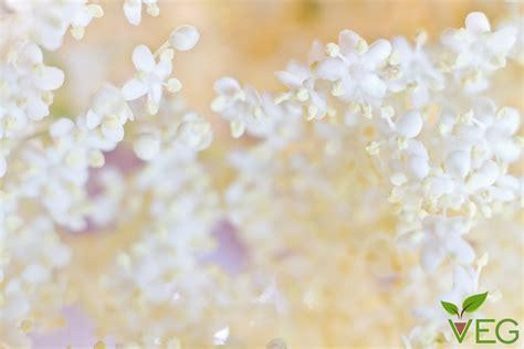 fiori di sambuco propriet 224 e benefici vegano gourmand
