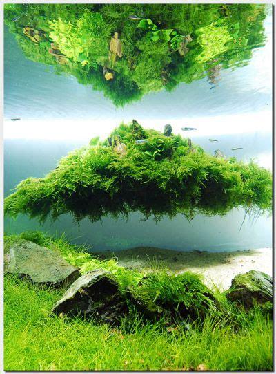 Aquascape Plants by Floating Island Una Pasada De Concepci 243 N Aquascaping