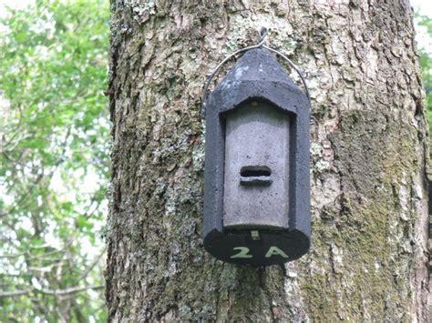 Cool Houseplans File Woodcrete Bat Box At Carstramont Wood Geograph Org