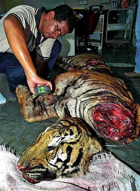 imagenes animales muertos animales muertos por la contaminaci 243 n 191 qu 233 son los