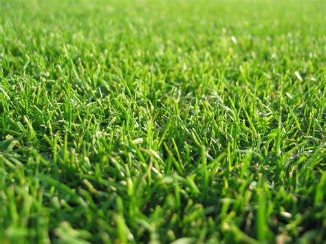 Paper From Grass - new pictures grass wallpaper grass cloth wallpaper