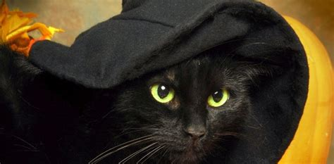 kitten themed names how my pet lives 5 most popular halloween themed pet names