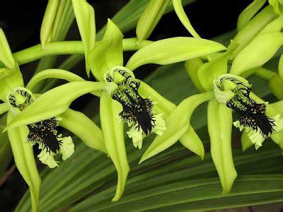 gambar bunga anggrek  indah gambar foto wallpaper