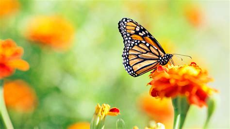 where to find caterpillars in your backyard how to build a butterfly garden realtor com 174
