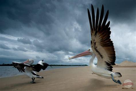 Vigel Pelicin 30 relaxing and serene photographs stockvault net