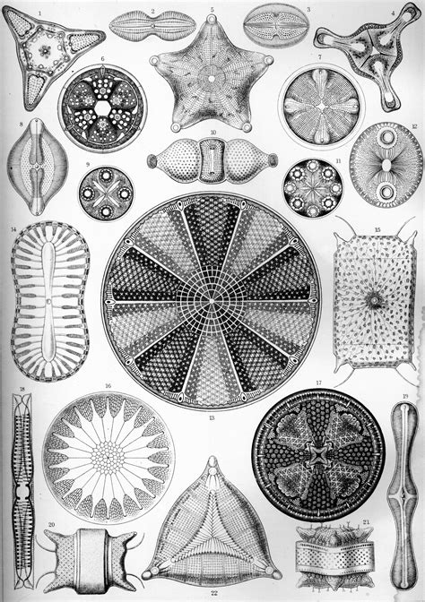 libro art forms from the about ernst haeckel emily mengchunhui