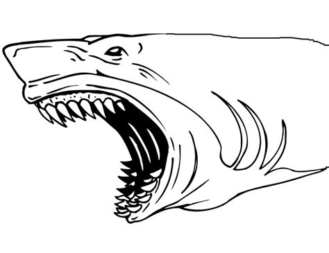 shark head coloring page shark jaws coloring page coloring book