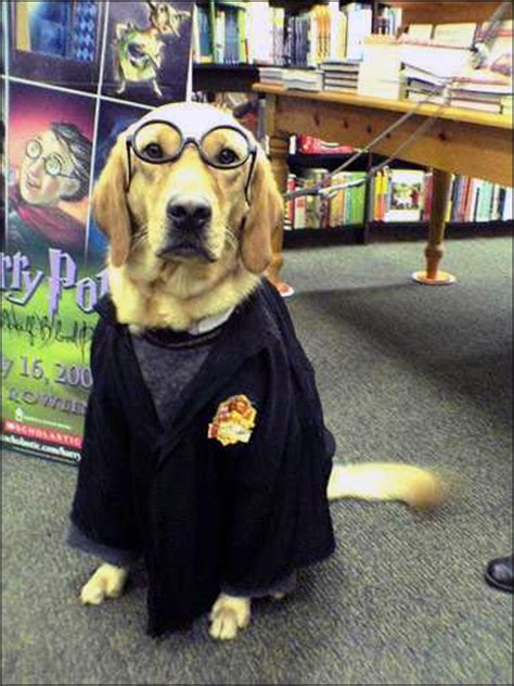 harry s dogs top 10 ideas for your dogs the miccostumes