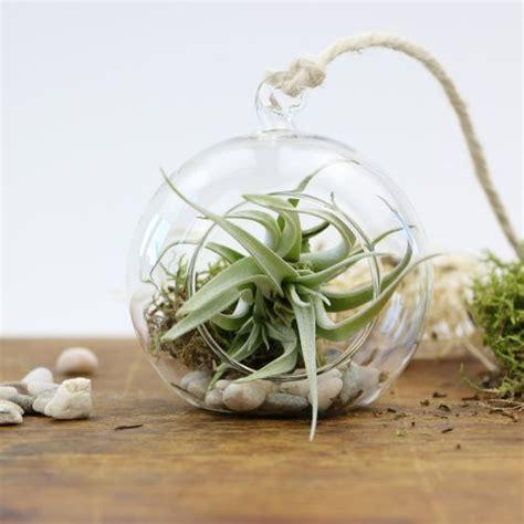 haengende luftpflanze im glas rund tolles geschenk zum
