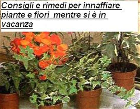 innaffiare fiori vacanza consigli e rimedi per innaffiare piante e fiori mentre si