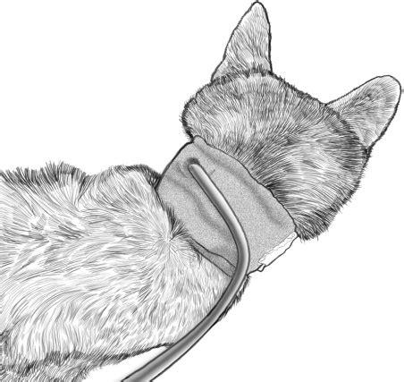 Meja Operasi Hewan teknik operasi pharyngotomy pada hewan bedah sistem