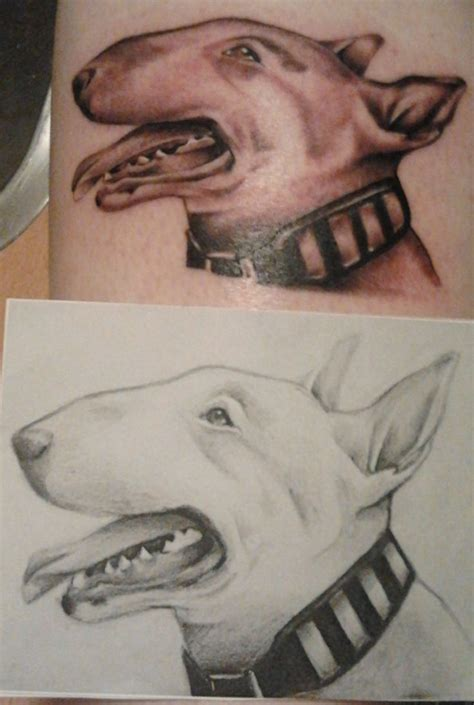 bullterrier sketch and bull terrier