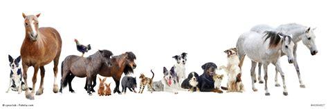 Small Animals Free To Home Tierversicherung Die Tierkrankenversicherung
