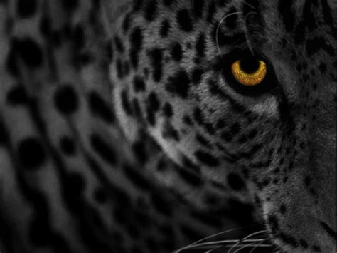 Vintage Background Leopard Skin Style Leopard Skin Wallpaper Wallpapersafari
