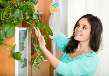 12 ways that plants can improve your life kirn radio iran everything grows 5 ways indoor plants will change your life