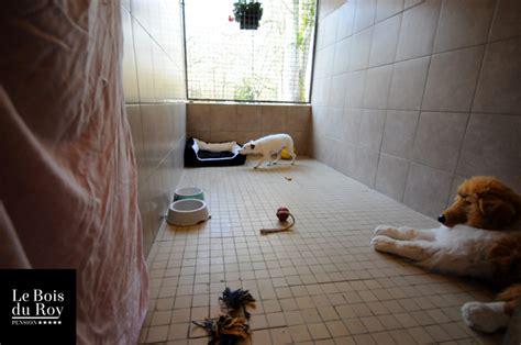 chambre de chien chambre avec pr 233 au pension pour chiens le bois du roy