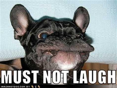 Hysterical Laughing Meme - funny image collection funny dog jokes jokes humor