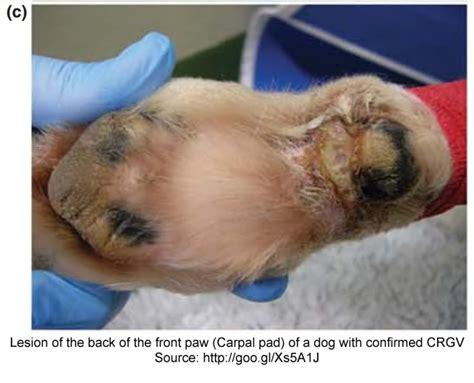 carpal pad symptoms pictures alabamarot co uk