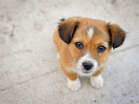 where can i find free puppies 15 and puppies photography
