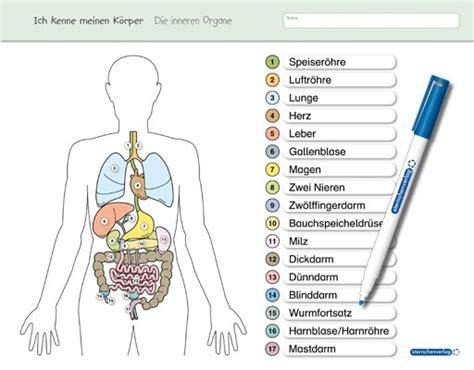 menschlicher körper innere organe ich kenne meinen k 246 rper die inneren organe 183 sternchenverlag