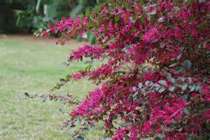 blooming bushes automatic gardening real gluten free food