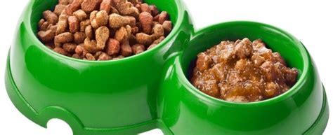 Minyak Ikan Buat Kucing jenis dan cara merawat kucing makanan untuk kucing