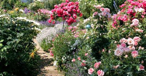 passende pflanzen zu lavendel die sch 246 nsten rosenbegleiter erg 228 nzen sich auf