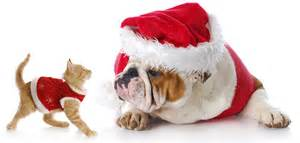 Holiday hazard tips dr leeann dumars abvp pet medical center