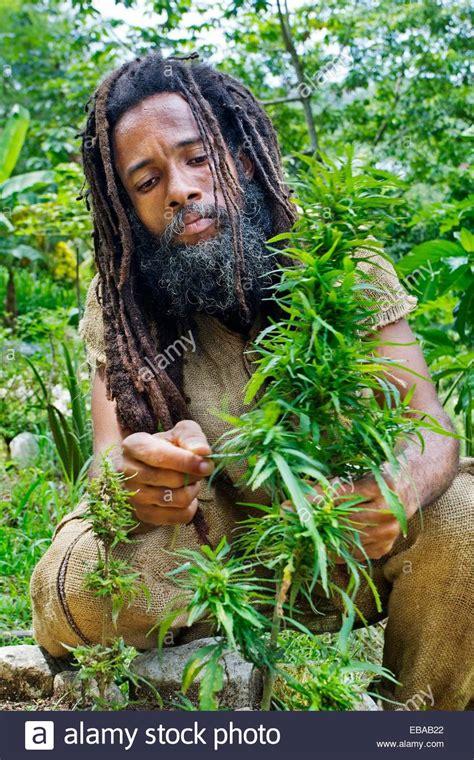 rastafarianism jamaican culture 8 reasons why jamaican picture of rastafarian impremedia net