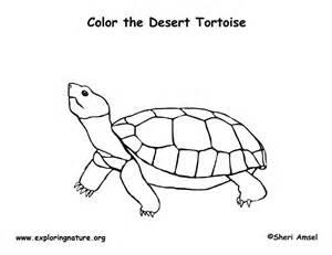 tortoise color desert tortoise coloring page