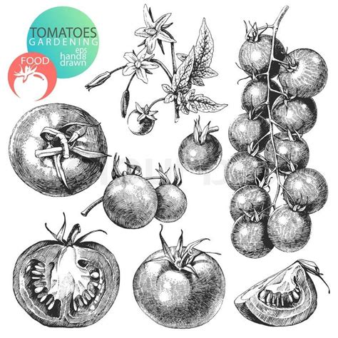 Food Drawing Pen Pencil Makanan Harga vintage onions clip search foster sundry