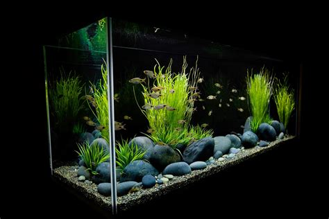 desain aquarium keren kumpulan foto aquarium aquascape keren foto bugil bokep 2017