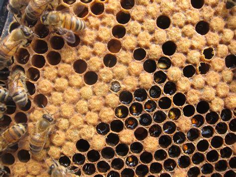 beehive apiculture santropol roulant