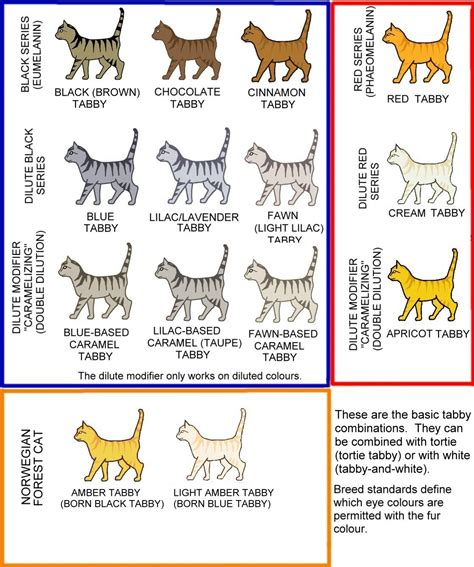 Color Pattern Cat | tabby patterns and colors cats meow barkers