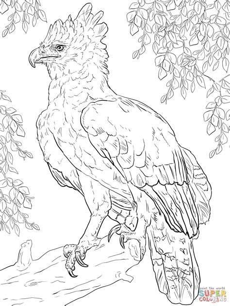 harpy eagle perched on a branch coloring page free