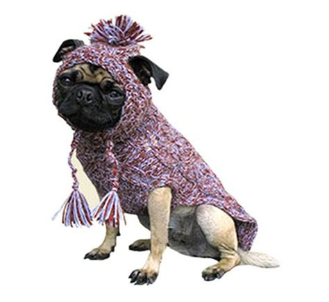 pug wear 90 best images about animals wearing sweaters on chihuahuas doggies and pug