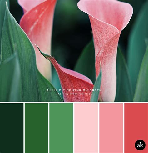 calla colors 191 best images about color on orange pink